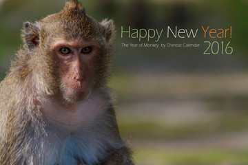 New year 2016 card with portrait of male monkey with blur background and copy space