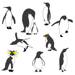 Illustration of the Penguins. Vector Image
