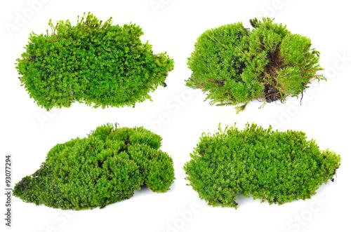 green moss isolated on white bakground photo libre de droits sur la banque d 39 images fotolia. Black Bedroom Furniture Sets. Home Design Ideas