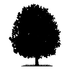 Tree and grass silhouette