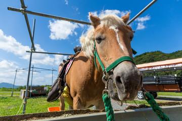 Horses feeding on hay