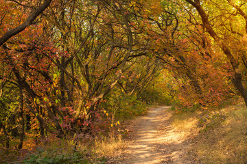 Magical road in a autumn forest.