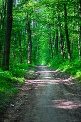 Foto op Canvas Natuur autumn forest trees