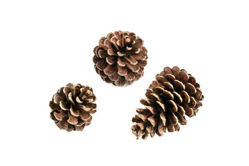 various pine cone trees isolated on white