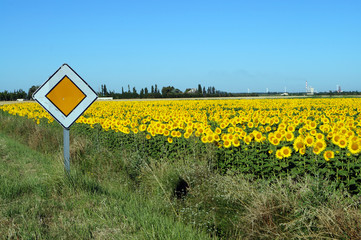 field of sunflowers and a sign of the main road