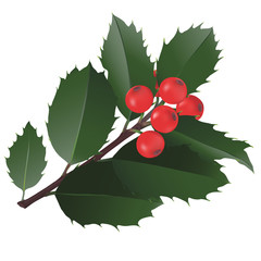 Christmas Holly. 