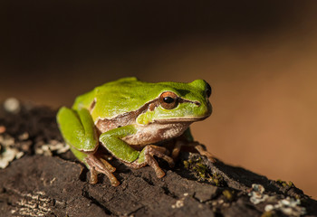 frog on a tree bark