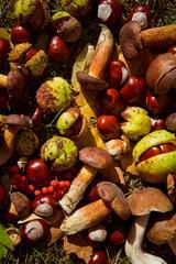 autumn conkers mushrooms