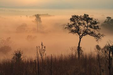 Foggy Meadow Sunrise