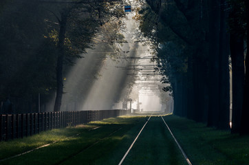 Green tramway in tree alley, in the morning mist illuminated by the sun, Krakow, Poland