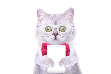 Smart beautiful british cat with a tablet. Funny animals. Trendy cat dressed in beautiful clothes. Hipster cat