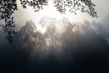 Smoke-haze pollution in Indonesia.