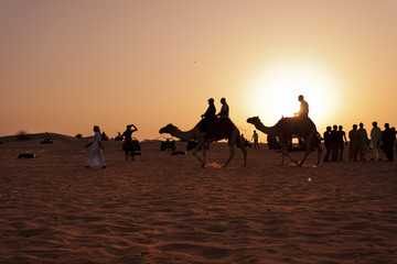 Riding camels at sunset