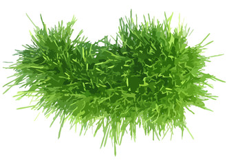 Vector illustration grass