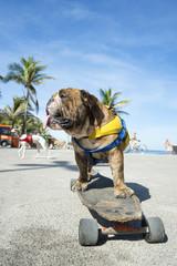 Brazilian dog riding skateboard under the palm trees at Arpoador Ipanema Beach Rio de Janeiro Brazil