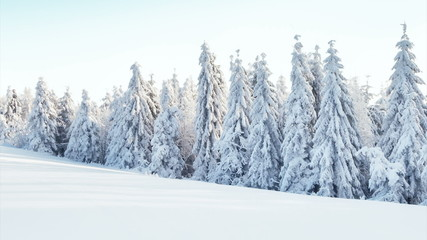Wall Mural - Winter snowy forest with meadow and blue sky