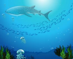 Whaleshark swimming under the ocean