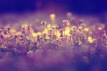 Foto op Canvas Snoeien summer landscape background sun flowers Rays