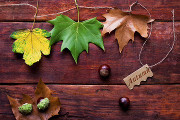 Colorful autumnal background with leaves and chestnuts.Tag with the Words Autumn and a Colorful Autumn Leaf in the Background
