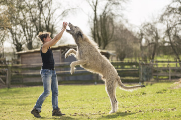Irish Wolfhound Dog Breed Information and Pictures