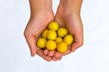 hand yellow plums