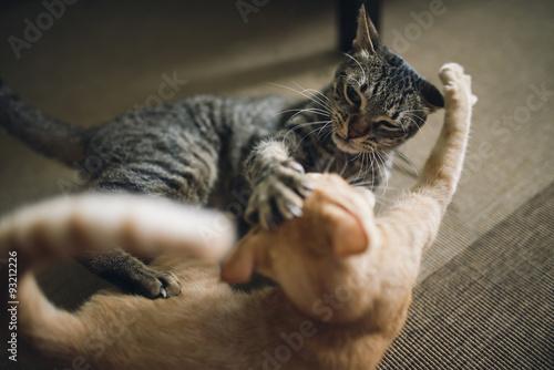 how do you make a cat stop biting