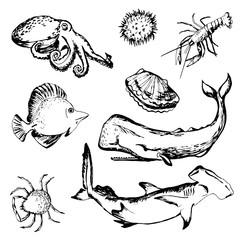 Hand drawn sea life: shellfish, lobster, sperm whale, shark