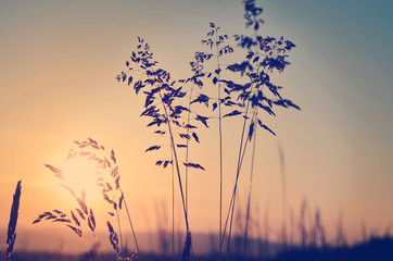 Meadow at sunset, zen meditative scene