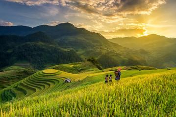 Printed roller blinds Rice fields Terrace rice field - Mù Căng Chải District, Yen Bai Province, Vietnam