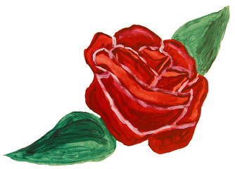 Red rose, painting