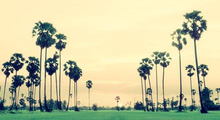 Palm trees vintage color