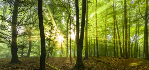 Sonne Nebel Wald Frühling