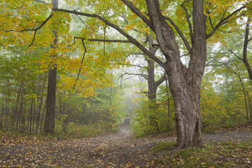 A foggy autumn morning in Springside Park in the Berkshire Mountains of Western Massachusetts.