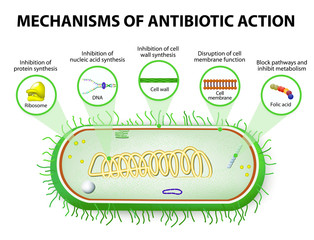 Mechanisms of Action of Antimicrobials