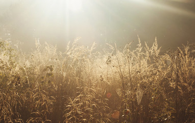 Golden grass fx
