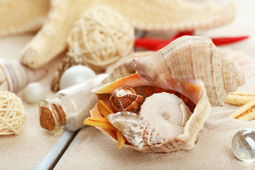 Beautiful sea composition with shells close up