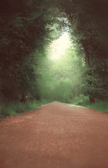 Magic dense forest and road with light at the end tunnel, summer