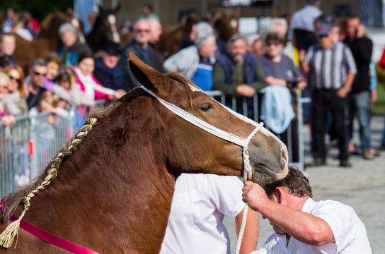 Foire au chevaux
