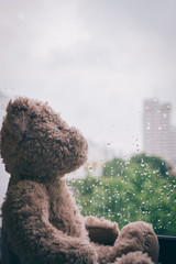 Lonely  bear in raining day.  select focus.
