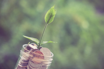 Sprout growing on glass piggy bank in saving money concept with