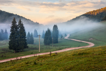road  near fir forest in foggy mountains at sunrise
