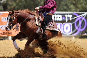 The side view of a rider stopping a horse in the sand.