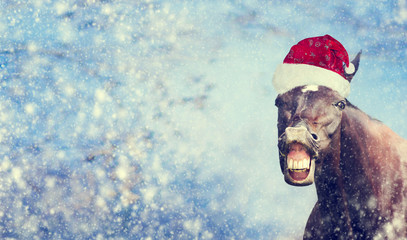 Funny Christmas  horse with Santa hat smiling and looking into camera