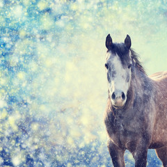 Beautiful  gray horse portrait on winter background of snow-fall