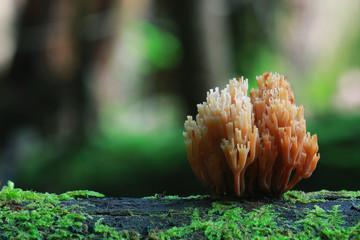 small mushrooms toadstools macro microcosm