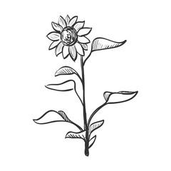 doodle sunflower