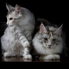 Two cats on a table