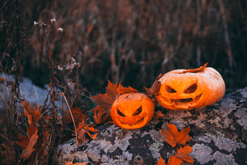 Halloween pumpkins in forest on stone.