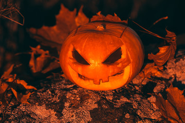 Halloween pumpkin photo in forest.