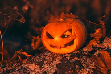 Halloween pumpkin photo in forest.